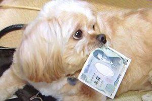 FX自動売買ツール「MoneyDog(マネードッグ)」とは?